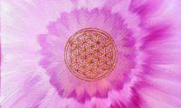Energielebensblume pink