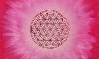 Lebensblume rosa